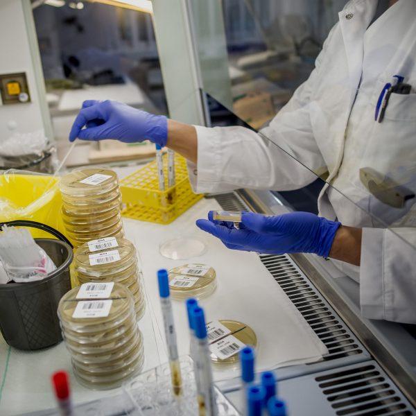 Laboratoriopöytä, henkilöllä n siniset muovihanskat käsissä. Pöydällä on paljon laisisia esineitä.