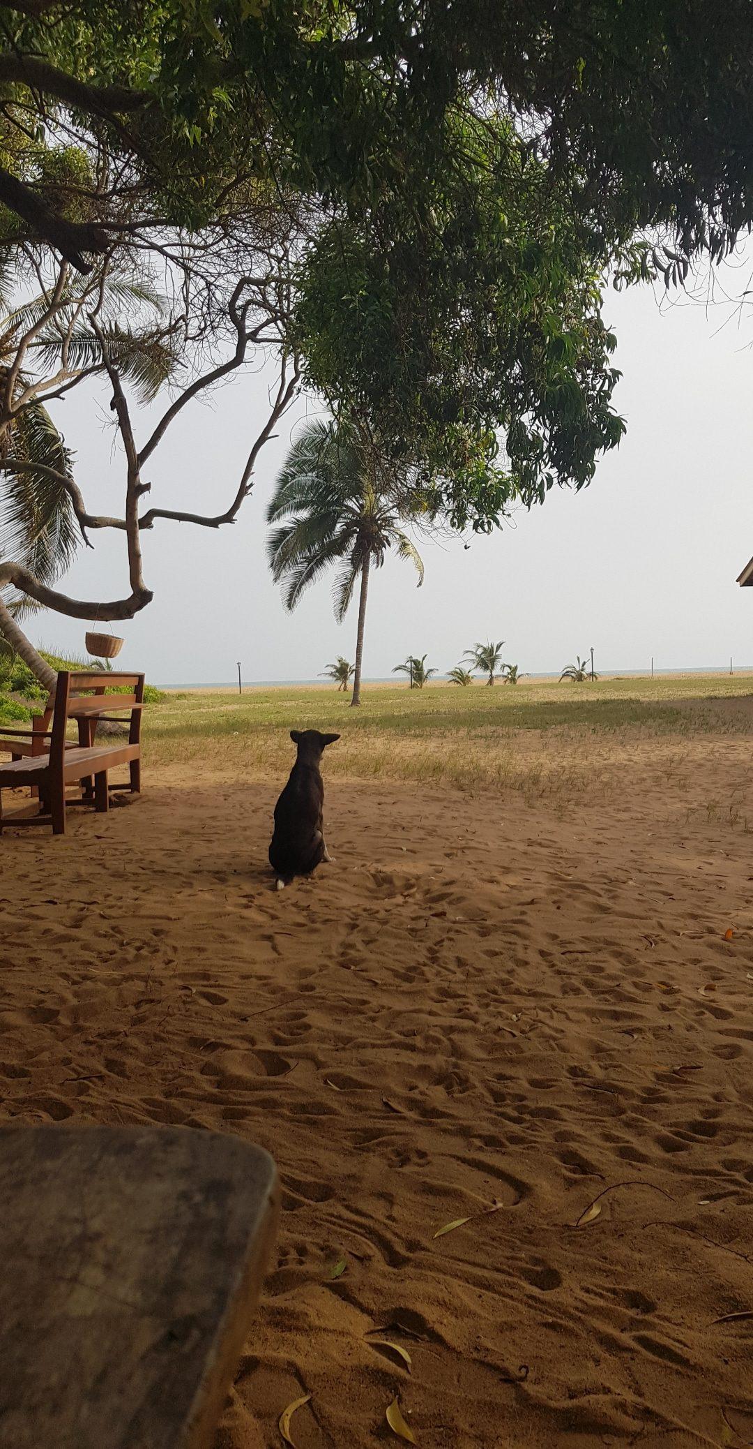 Koira istuu hiekalla. Sen yläpuolella on puu.